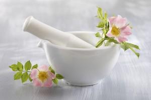 Églantier - Plante médicinale