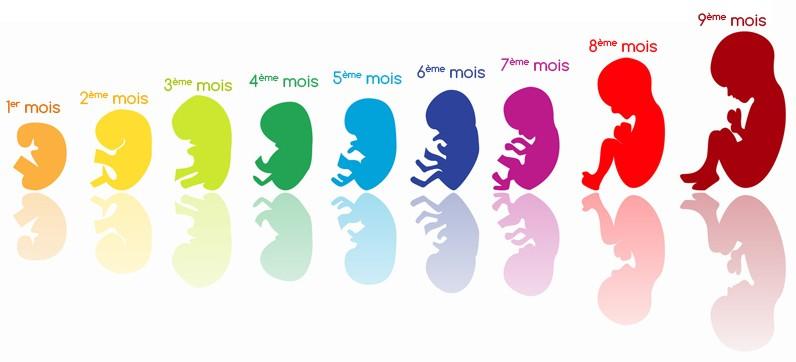 evolution foetus mois par mois